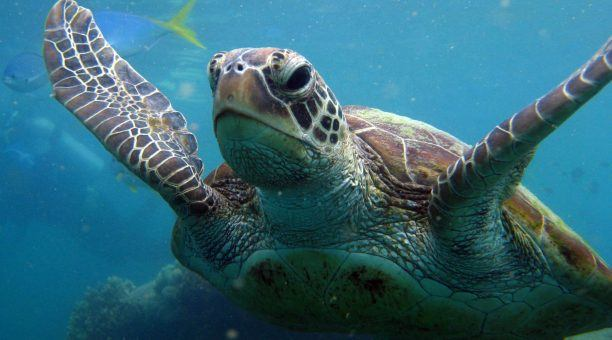 Get up close and see Sea Turtles on your Snorkel or Dive